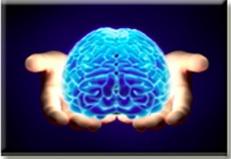 havening-brain
